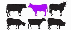 Фиолетовая корова. Сделай свой бизнес выдающимся!